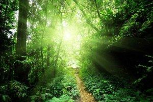 Licht im Dschungel